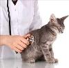 Ветеринарные клиники в Бакале